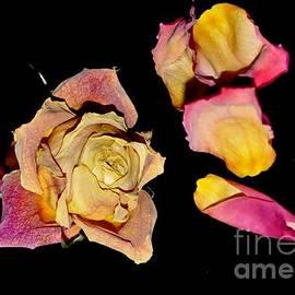 Sylvie Leandre - Roses