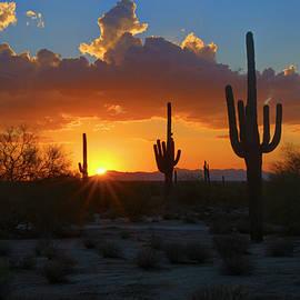 Saija  Lehtonen - A Bit of Desert Sunshine