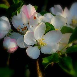 Karen Cook - A bushel of blossoms
