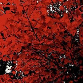 Elizabeth Tillar - A Canopy of Red
