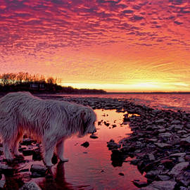 Carolyn Fletcher - A Doggone Pretty Sunset
