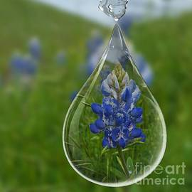 ARTography by Pamela Smale Williams - A Drop Of Texas Blue