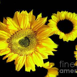 Merton Allen - A Few Sunflowers