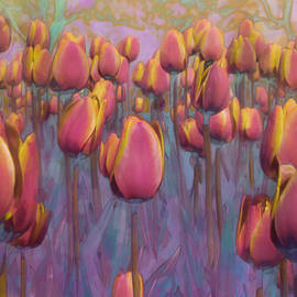 Hal Halli - A Field of Tulips