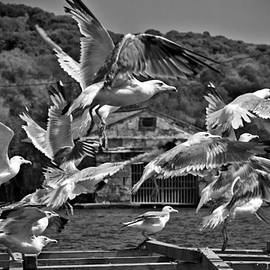 Pedro Cardona - A flock of seagulls flying high to summer sky