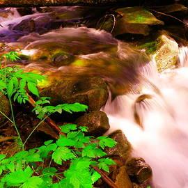 Jeff Swan - A flowing beauty