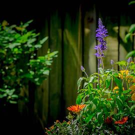 Bruce Pritchett - A Garden Dream