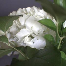 Ella Kaye Dickey - A Garden Dream