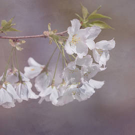 Kim Hojnacki - A Gentle Touch of Spring