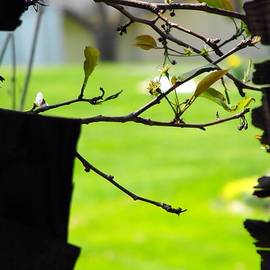 Beverly Canterbury - A Glimpse Of Spring