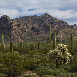 Saija  Lehtonen - A Green Desert Forest