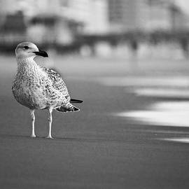 Rachel Morrison - A Gull Looks Out to Sea