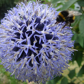 Martin Wall - A Happy Bee