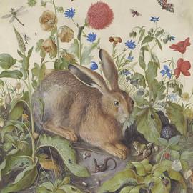 A Hare Among Plants - Hans Hoffman