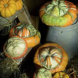 Ann Garrett - A Ladder of Pumpkins