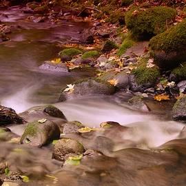 Jeff Swan - A leaf dappled stream