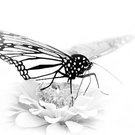 Nikolyn McDonald - A Light Touch - Butterfly