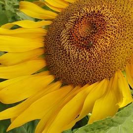 Bruce Bley - A Little Sunshine