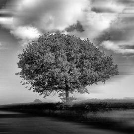 Rene Triay Photography - A Lone Tree in the Meadows