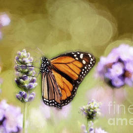 Darren Fisher - A Monarch and her Lavender