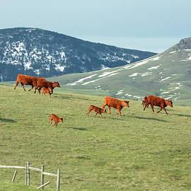 A Moving Herd - Todd Klassy