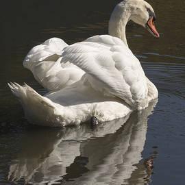 Bruce Frye - A Mute Swan-Two