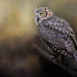 Jai Johnson - A Night With The Great Horned Owl 2 by Jai Johnson