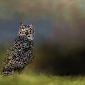 Jai Johnson - A Night With The Great Horned Owl 4 by Jai Johnson