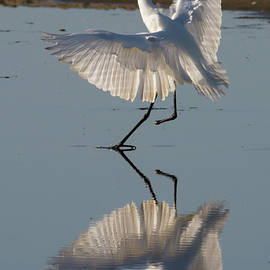 Bruce Frye - A One-footed Egret Alights