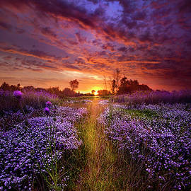 Phil Koch - A Peaceful Proposition