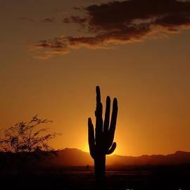 Carol Komassa - A Perfect Arizona Sunset