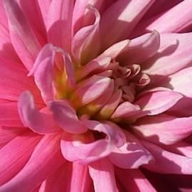 Bruce Bley - A Pop of Pink