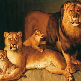A Pride of Lions - Jean-Baptiste Huet