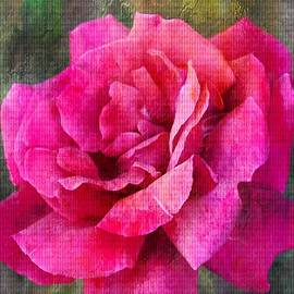 Clare Bevan - A Rose Canvas