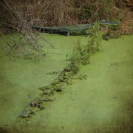 Carla Parris - A Row of Baby Gators