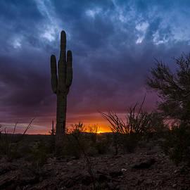 Ed  Cheremet - A Saguaro Sunset