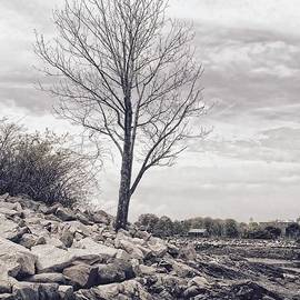 Marcia Lee Jones - A Single Tree