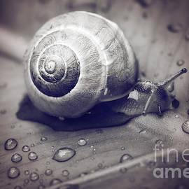 LHJB Photography - A snails journey..