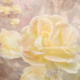 Victoria Harrington - A Softer Rose