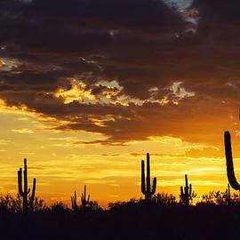 Saija  Lehtonen - A Sonoran Silhouette