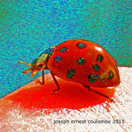 Joseph Coulombe - A Spring Lady Bug