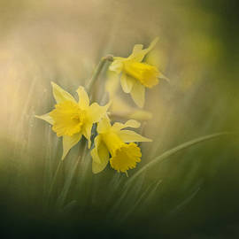 Jai Johnson - A Spring Morning Welcome