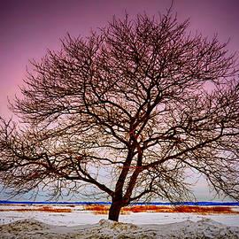 Tricia Marchlik - A Stark Winter