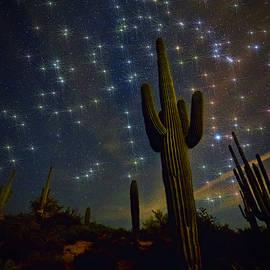 Saija Lehtonen - A Starry Desert Evening
