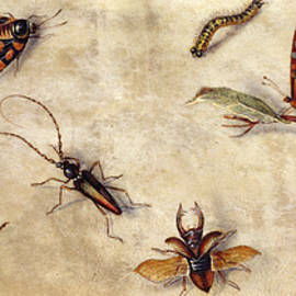 A Study of Various Insects, Fruit and Animals - Jan Van Kessel the Elder