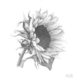 Patricia Hiltz - A Sunflowers Beauty