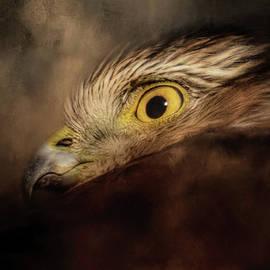 Jai Johnson - A Tiny Force Sharp Shinned Hawk