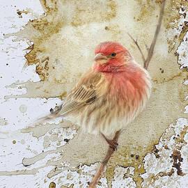 Jai Johnson - A Tiny Splash Of Red Songbird Art