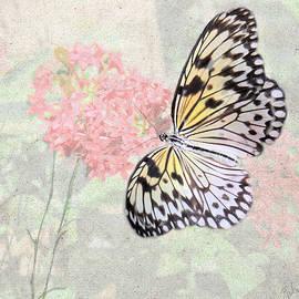 Rosalie Scanlon - A Touch of White