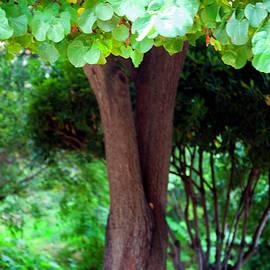Madeline Ellis - A Tree Lovelier Than A Poem